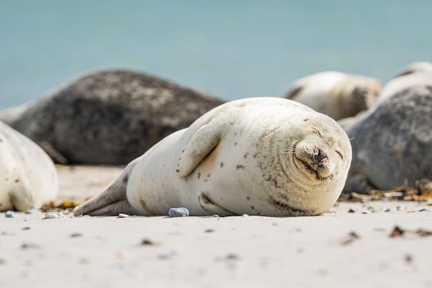 Lion de mer gisant sur le sol