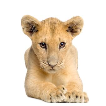 Lionceau (4 mois) devant sur un blanc isolé