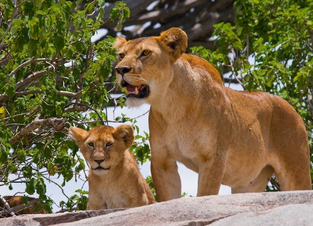 Lionne et son petit sur un gros rocher. parc national. kenya. tanzanie. masai mara. serengeti.