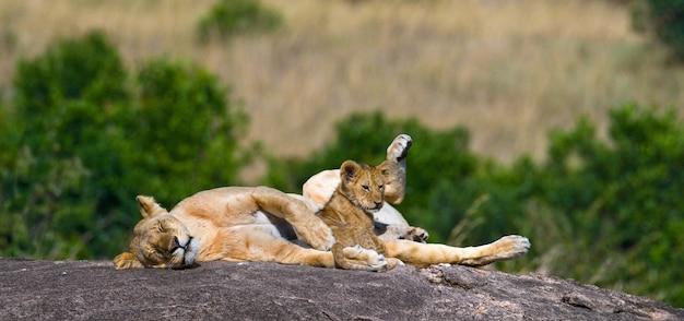 Lionne et son petit sur un gros rocher