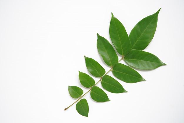 Liseron vert à feuilles rondes sur le fond noir et blanc laissez un espace pour remplir les lettres.