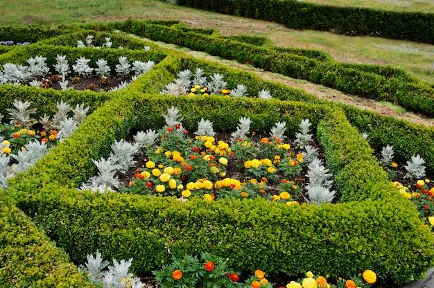 Lit de fleurs en forme de diamant au jardin avec une fleur de souci