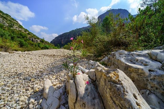 Lit de rivière à sec avec pierres blanches et gros rochers dans la vallée de la montagne.