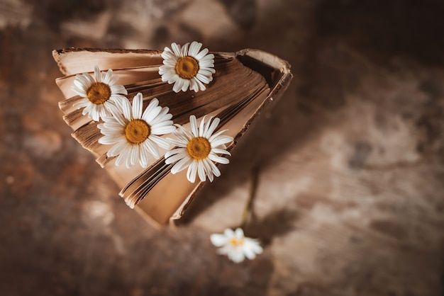 Livres anciens avec des fleurs de marguerites des champs blancs.