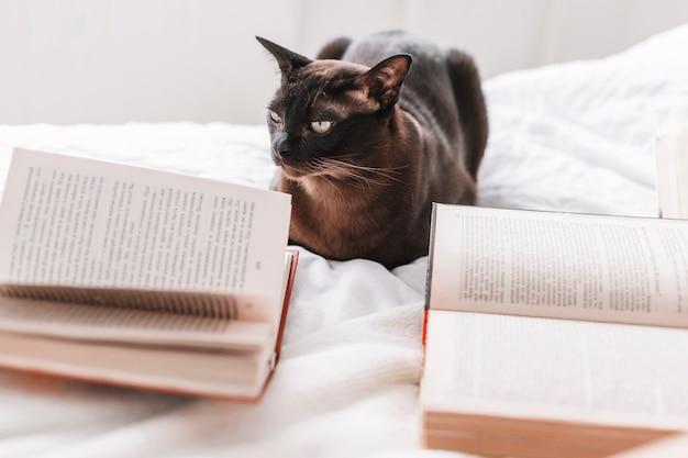 Livres près de chat sur le lit