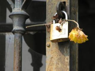 Lockflower, romance