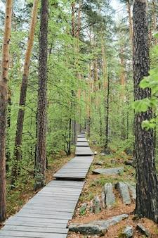 Long chemin dans la forêt composé de planches de bois entourées de pins et de pierres le jour d'été