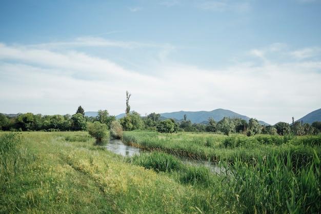 Long plan de pâturage vert avec jet d'eau