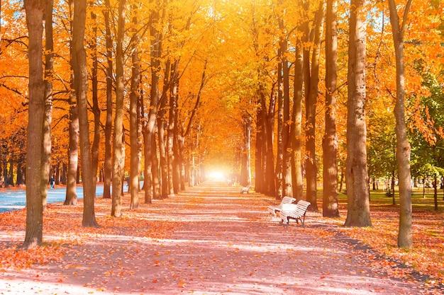 Longue avenue de tunnels d'arbres avec bancs à l'automne automne.
