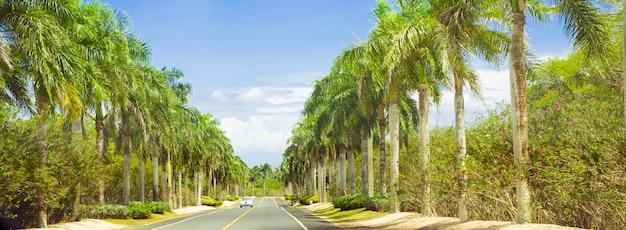 Longue route bordée de palmiers et de ciel bleu.