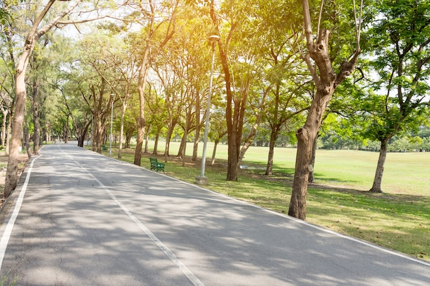 Longue route avec champ vert