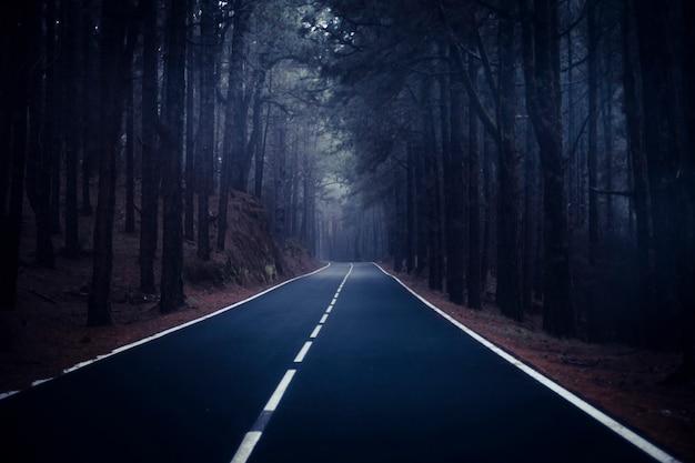 Longue route à la montagne avec forêt de pins et nuages de brouillard devant et ciel clair gris