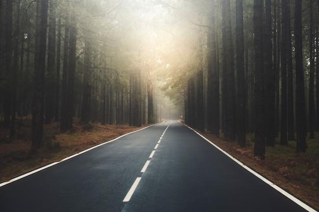 Longue route avec soleil au bout de la montagne avec forêt de pins et nuages de brouillard devant et ciel gris clair