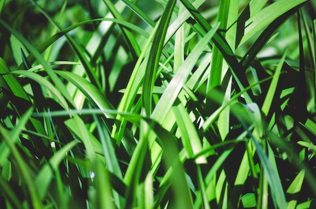 De longues feuilles de lys contrastées créent un motif en arrière-plan