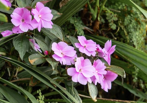 Lot de fleurs roses dans le jardin de fleurs