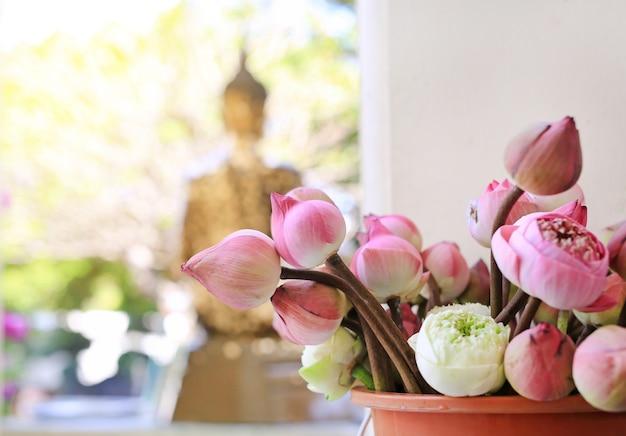 Lotus pour cérémonie religieuse bouddhiste
