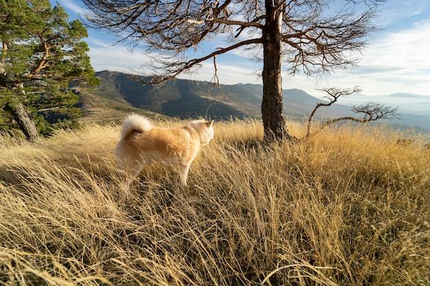 Loup dans le paysage de montagne chien avec beaucoup de cheveux