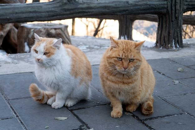 Lovely animal deux chats moelleux sont assis ensemble concept d'amitié