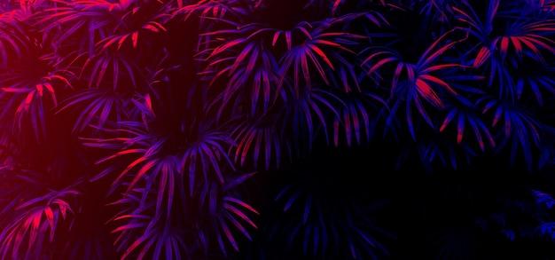 Lueur de feuille tropicale dans le fond de lumière noire.