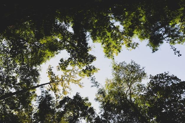Lumière et arbres, fond du parc forestier green summer