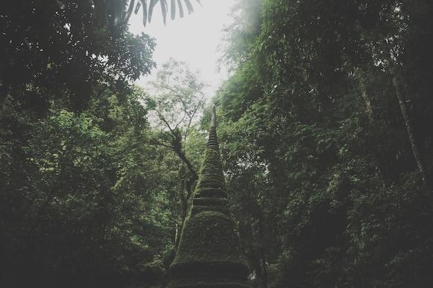 La lumière brille à travers les arbres