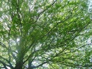 La lumière céleste, la nature