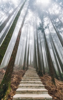 Lumière directe du soleil à travers les arbres avec du brouillard dans la forêt avec un escalier en pierre à alishan.
