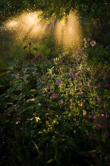 La lumière du soir brille sur l'herbe verte et les fleurs des champs