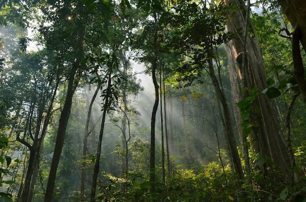 La lumière du soleil d'automne traverse les arbres.