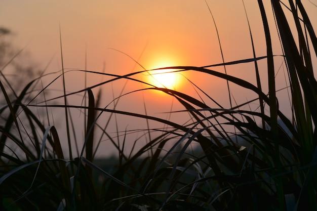 La lumière du soleil brille dans l'herbe le matin
