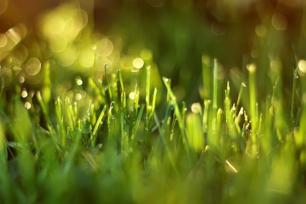 La lumière du soleil brille à travers les brins d'herbe.