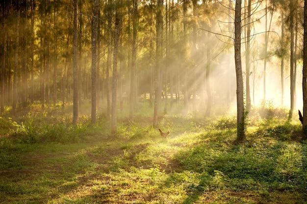 La lumière du soleil brisant les arbres et les rayons de lumière