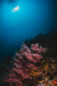 Lumière du soleil et corail