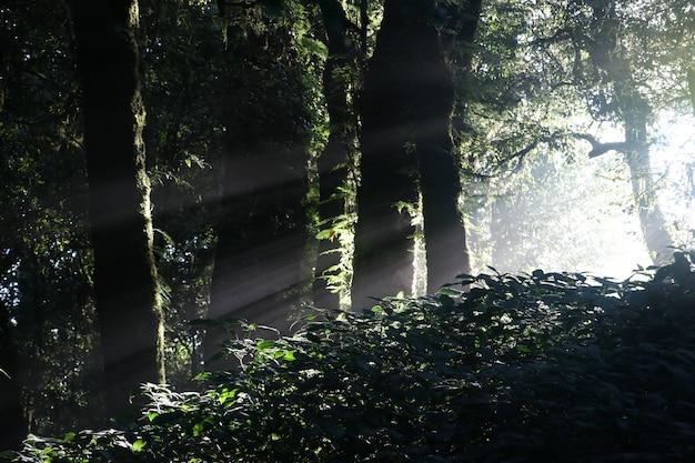 La lumière du soleil dans la forêt sombre avec l'ombre des arbres sauvages