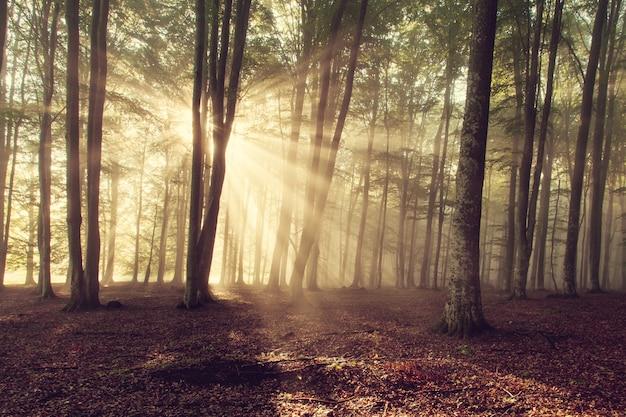 La lumière du soleil dans la forêt