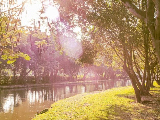 La lumière du soleil du matin à travers un beau lac calme dans le parc de la ville