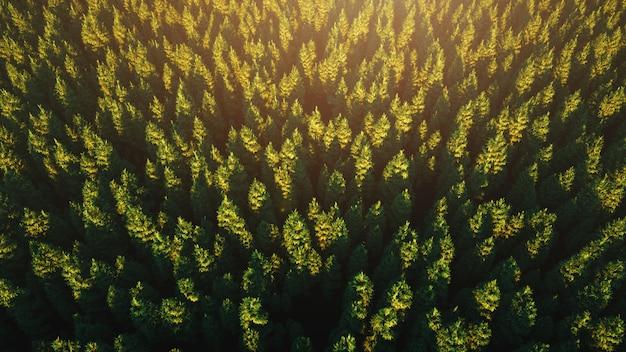La lumière du soleil sur une épaisse forêt verte