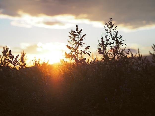 La lumière du soleil et des herbes aromatiques dans le parc.