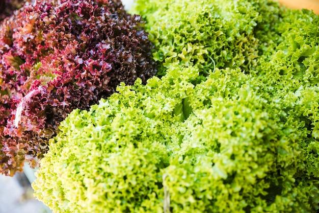 Lumière du soleil sur le kale frais vert et rouge