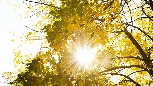 Lumière du soleil passant à travers les arbres d'automne