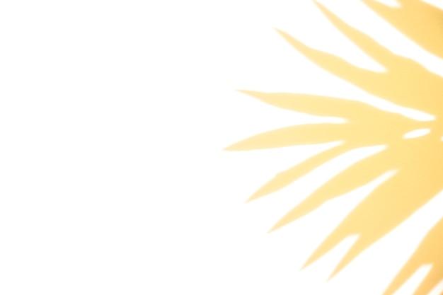 La lumière du soleil tombe sur l'ombre des feuilles sur fond blanc