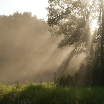 La lumière du soleil à travers les arbres du lac des bois, en ontario