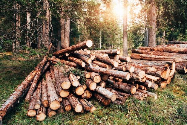 La lumière du soleil à travers les arbres. grumes en bois fraîchement récoltées empilées en tas dans la forêt verte