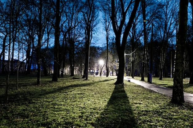 Lumière entre les arbres dans le parc la nuit