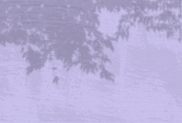 La lumière naturelle jette les ombres d'une branche de pomme sur le fond de mur lilas.