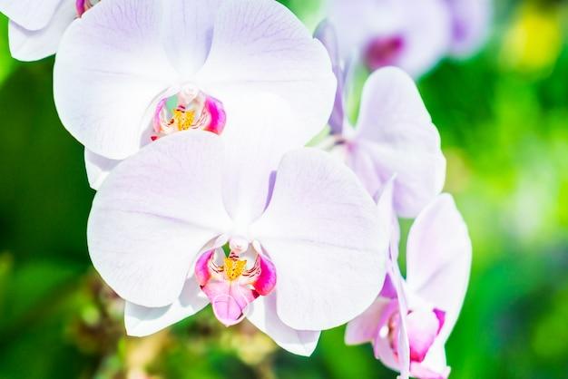 Lumineux plante violet orchidées de printemps