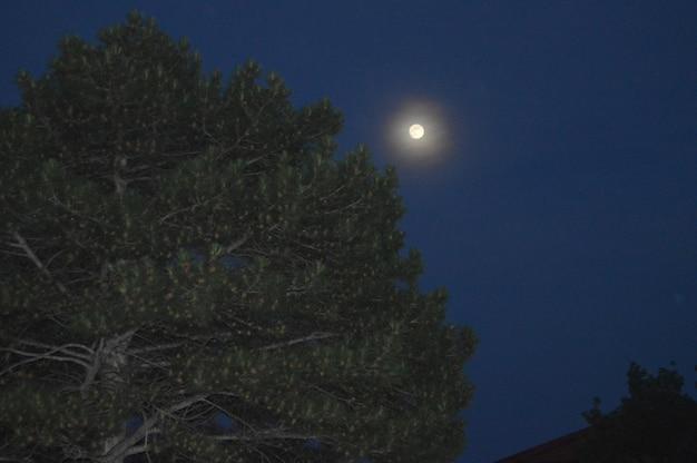 La lune dans le ciel nocturne brille sur l'arbre de pin avec des cônes.