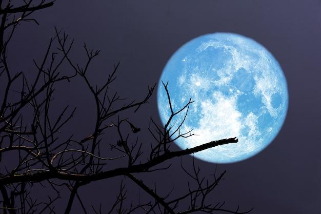 Lune super bleue et arbre de branche de silhouette dans le ciel nocturne, éléments de cette image fournis par la nasa