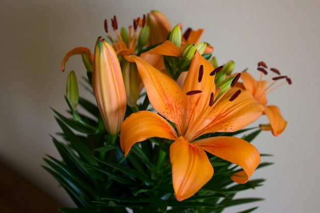 Lys orange avec des taches sur les pétales. plantes d'accueil.