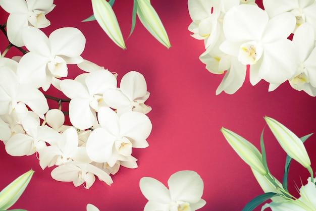 Lys d'orchidée blanche sur fond rouge.